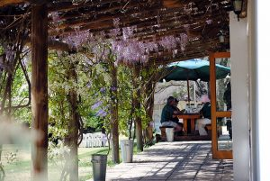 patio and wisteria